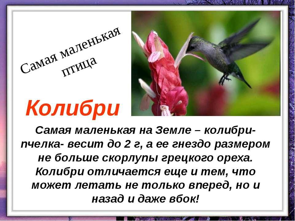 Самая маленькая на Земле – колибри- пчелка- весит до 2 г, а ее гнездо размеро...