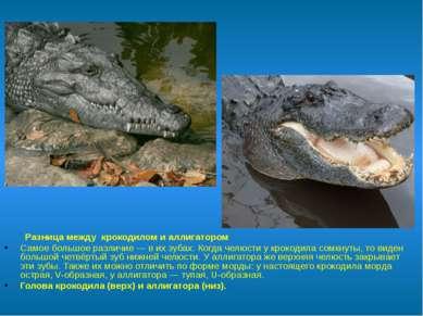 Разница между крокодилом и аллигатором Самое большое различие— в их зубах. ...