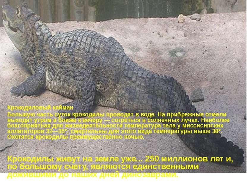 Крокодиловый кайман Большую часть суток крокодилы проводят в воде. На прибреж...