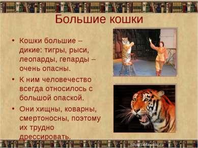 Большие кошки Кошки большие – дикие: тигры, рыси, леопарды, гепарды – очень о...