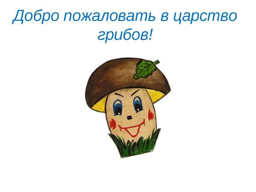 Добро пожаловать в царство грибов!