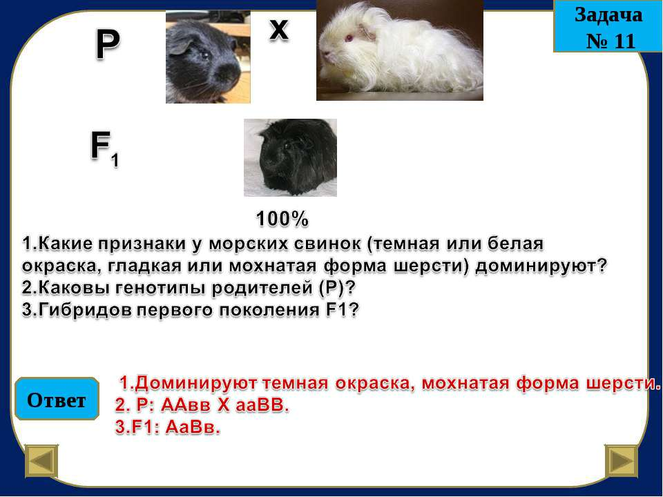 Ответ Задача № 11