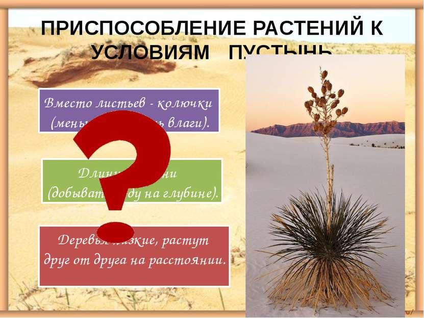 ПРИСПОСОБЛЕНИЕ РАСТЕНИЙ К УСЛОВИЯМ ПУСТЫНЬ Вместо листьев - колючки (меньше и...