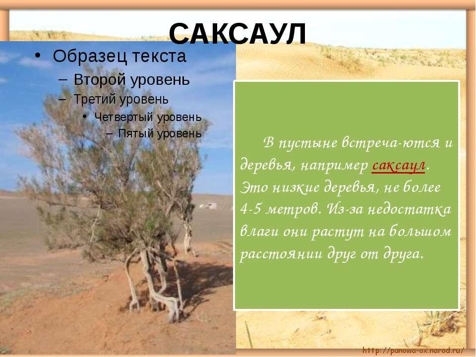 В пустыне встреча-ются и деревья, например саксаул. Это низкие деревья, не бо...