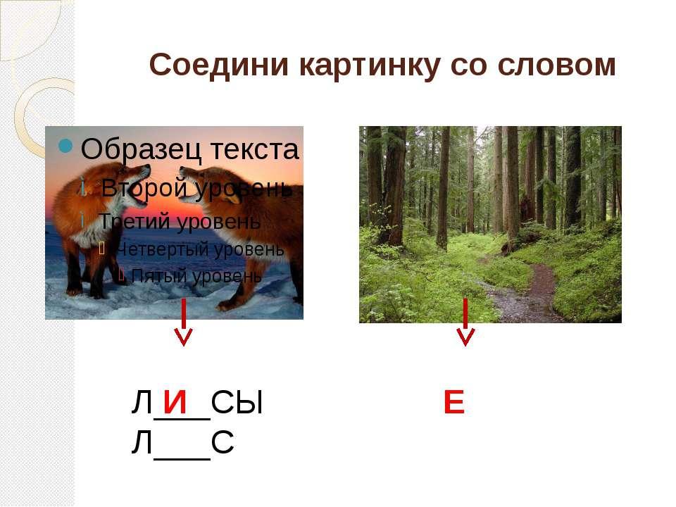 Соедини картинку со словом Л___СЫ Л___С И Е