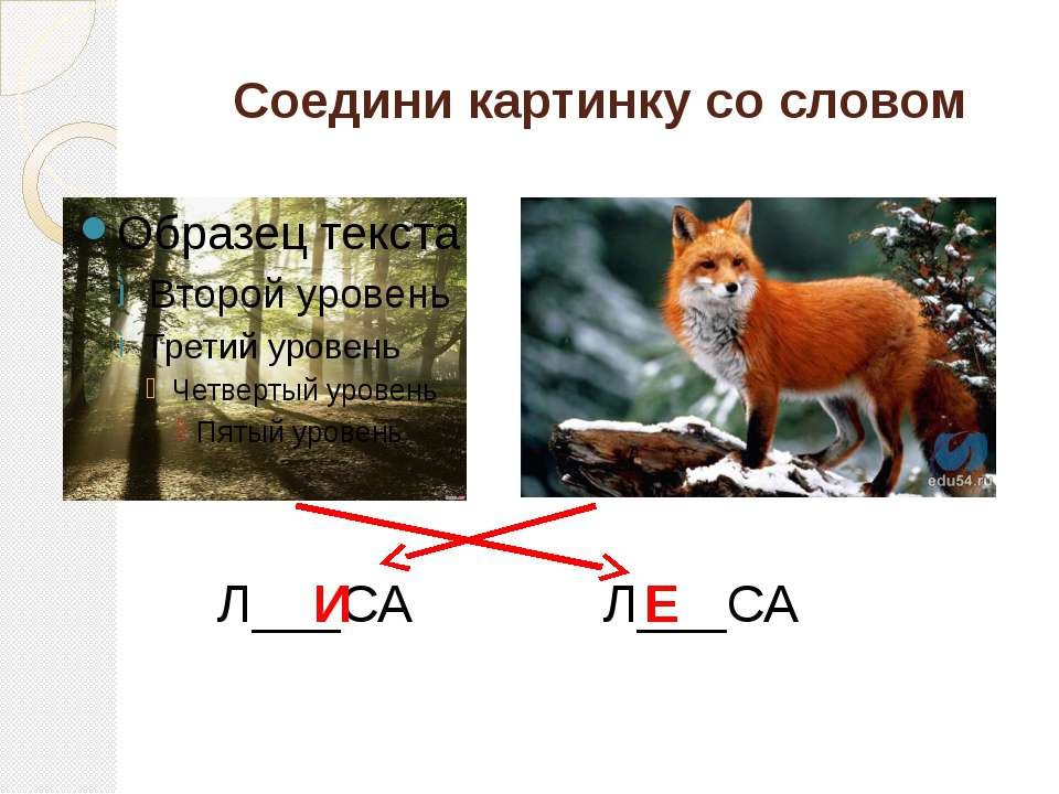 Соедини картинку со словом Л___СА Л___СА И Е