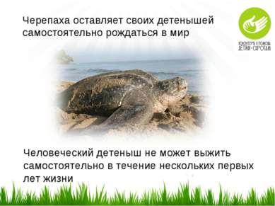 Черепаха оставляет своих детенышей самостоятельно рождаться в мир Человечески...