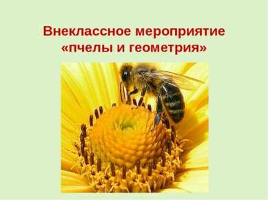 Внеклассное мероприятие «пчелы и геометрия»