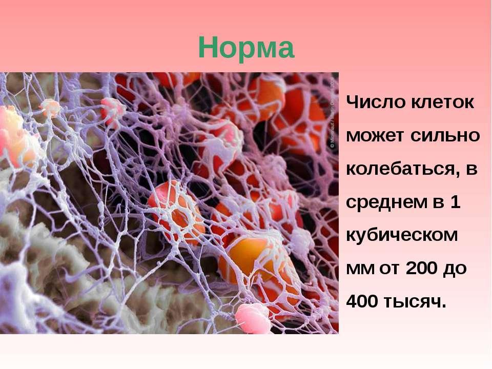Норма Число клеток может сильно колебаться, в среднем в 1 кубическом мм от 20...
