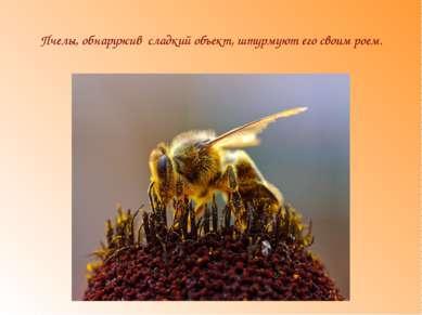 Пчелы, обнаружив сладкий объект, штурмуют его своим роем.