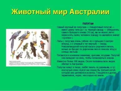 Животный мир Австралии ПОПУГАИ Самый крупный из попугаев — гиацинтовый попуга...