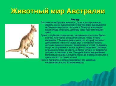 Животный мир Австралии Кенгуру Это очень своеобразное животное. Даже в зоопар...