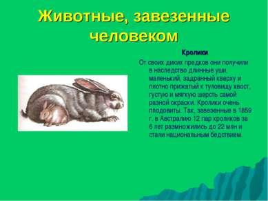 Животные, завезенные человеком Кролики От своих диких предков они получили в ...