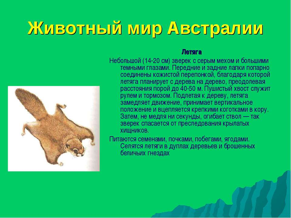 Животный мир Австралии Летяга Небольшой (14-20 см) зверек с серым мехом и бол...