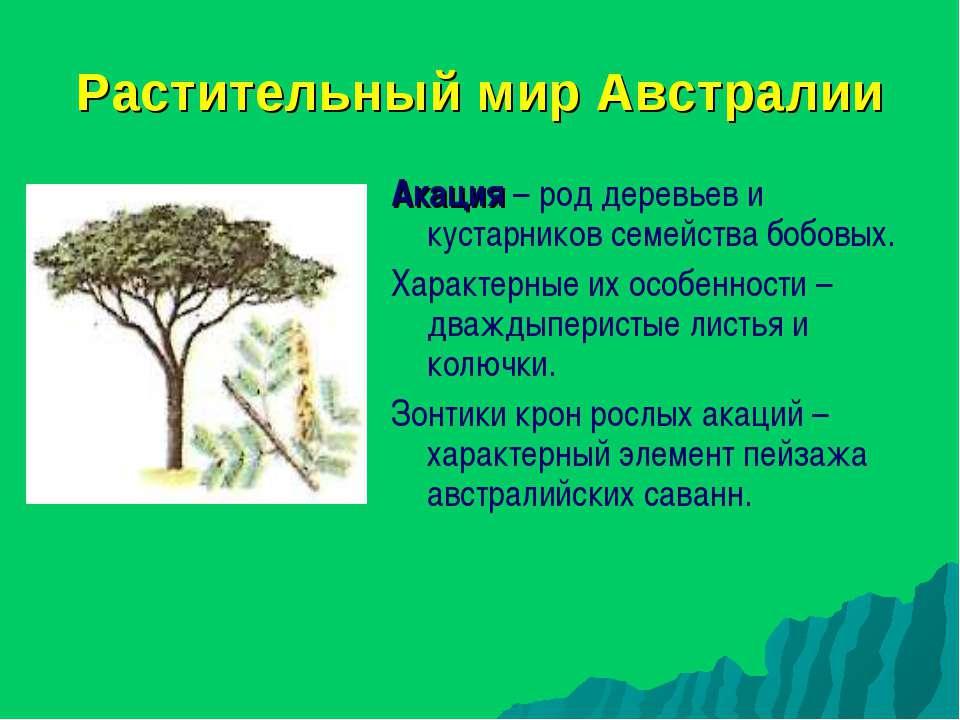 Растительный мир Австралии Акация – род деревьев и кустарников семейства бобо...