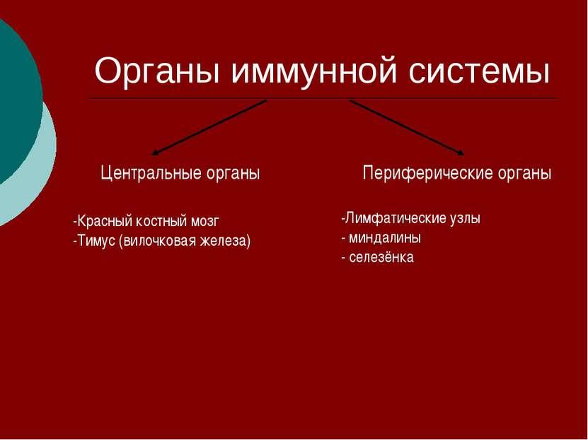 Органы иммунной системы Центральные органы Периферические органы -Красный кос...