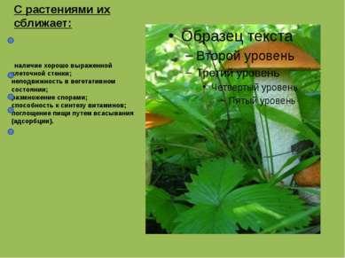 наличие хорошо выраженной клеточной стенки; неподвижность в вегетативном сост...