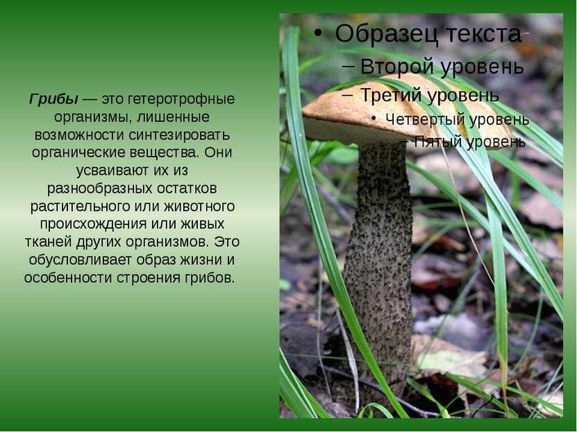 Грибы — это гетеротрофные организмы, лишенные возможности синтезировать орган...