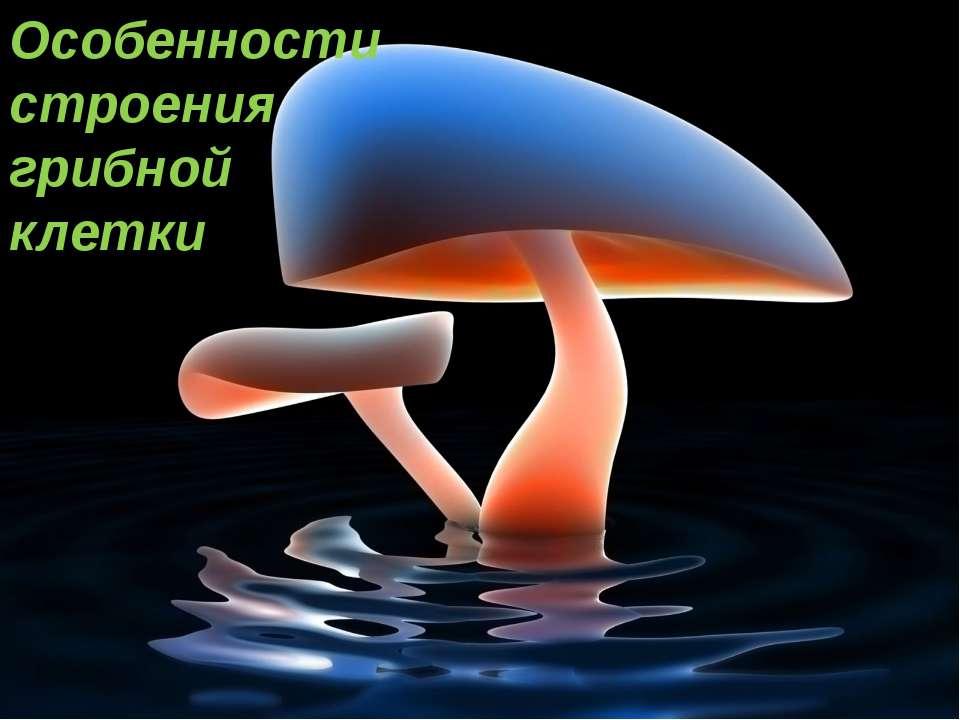 Особенности строения грибной клетки