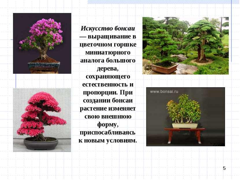 * Искусство бонсаи — выращивание в цветочном горшке миниатюрного аналога боль...