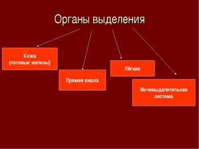 Органы выделения Кожа (потовые железы) Прямая кишка Лёгкие Мочевыделительная ...