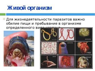 Живой организм Для жизнедеятельности паразитов важно обилие пищи и пребывание...