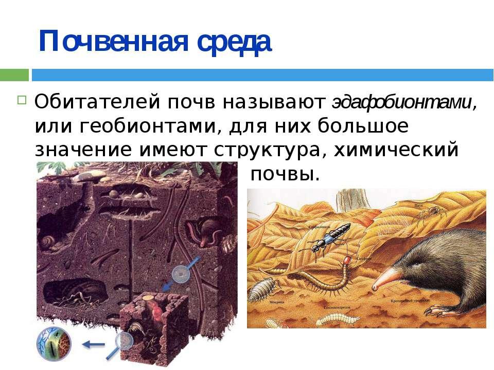 Почвенная среда Обитателей почв называют эдафобионтами, или геобионтами, для ...