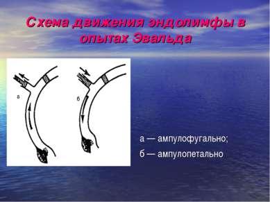 Схема движения эндолимфы в опытах Эвальда а — ампулофугально; б — ампулопетально