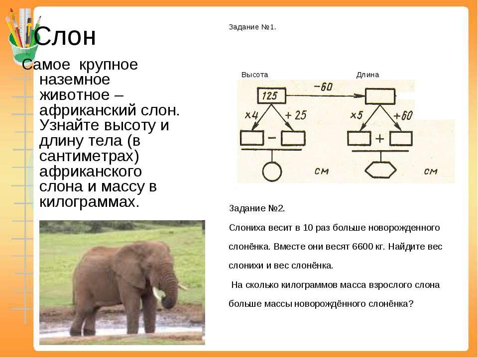 Слон Самое крупное наземное животное – африканский слон. Узнайте высоту и дли...