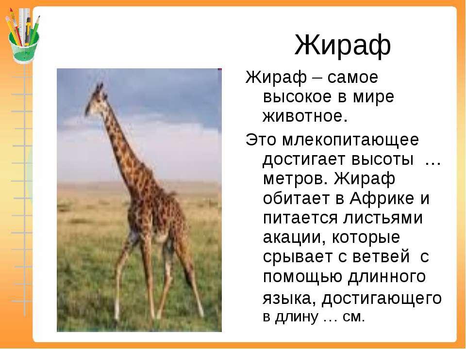 Жираф Жираф – самое высокое в мире животное. Это млекопитающее достигает высо...