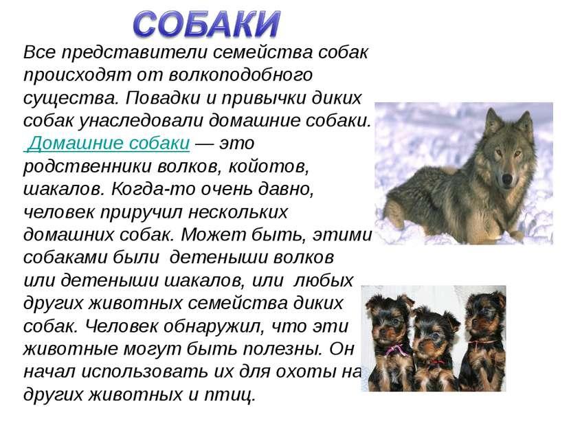 Все представители семейства собак происходят от волкоподобного существа. Пова...