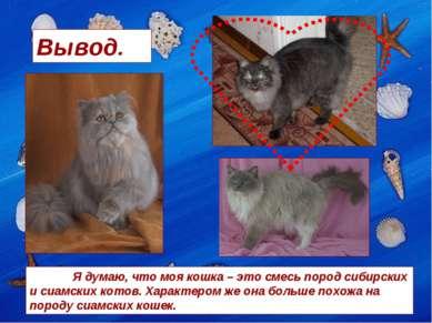 Вывод. Я думаю, что моя кошка – это смесь пород сибирских и сиамских котов. Х...