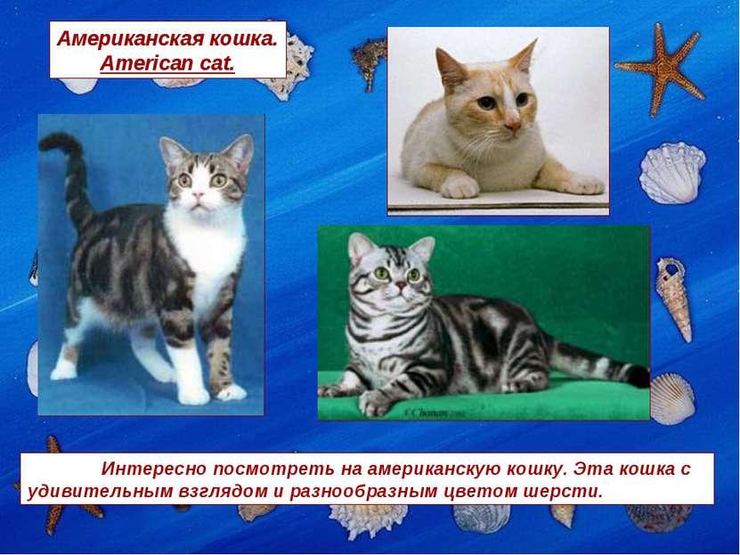 Американская кошка. American cat. Интересно посмотреть на американскую кошку....
