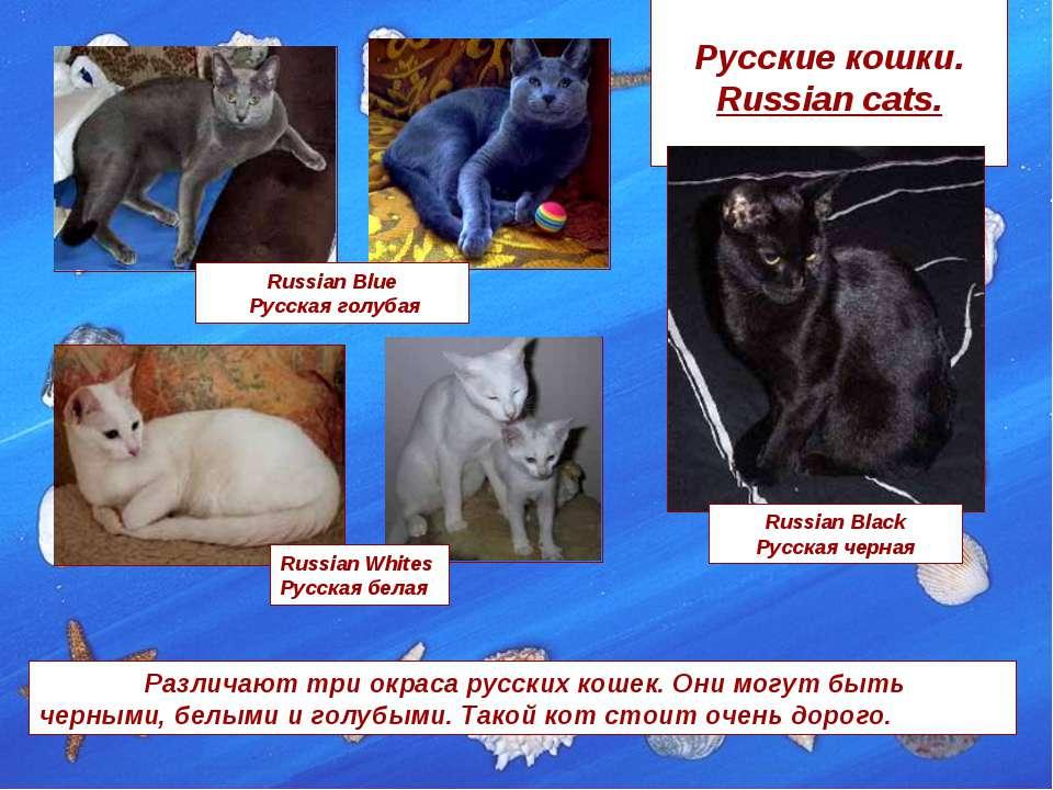 Русские кошки. Russian cats. Russian Blue Русская голубая Russian Black Русск...