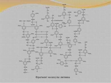 Фрагмент молекулы лигнина
