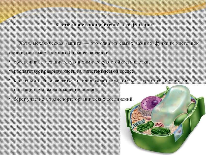 Клеточная стенка растений и ее функции Хотя, механическая защита — это одна и...