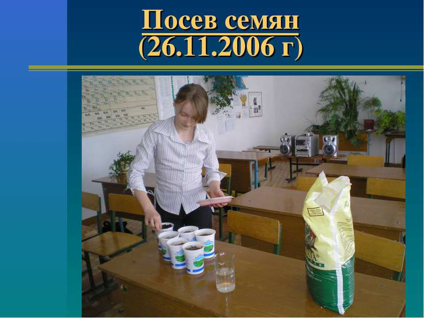 Посев семян (26.11.2006 г)