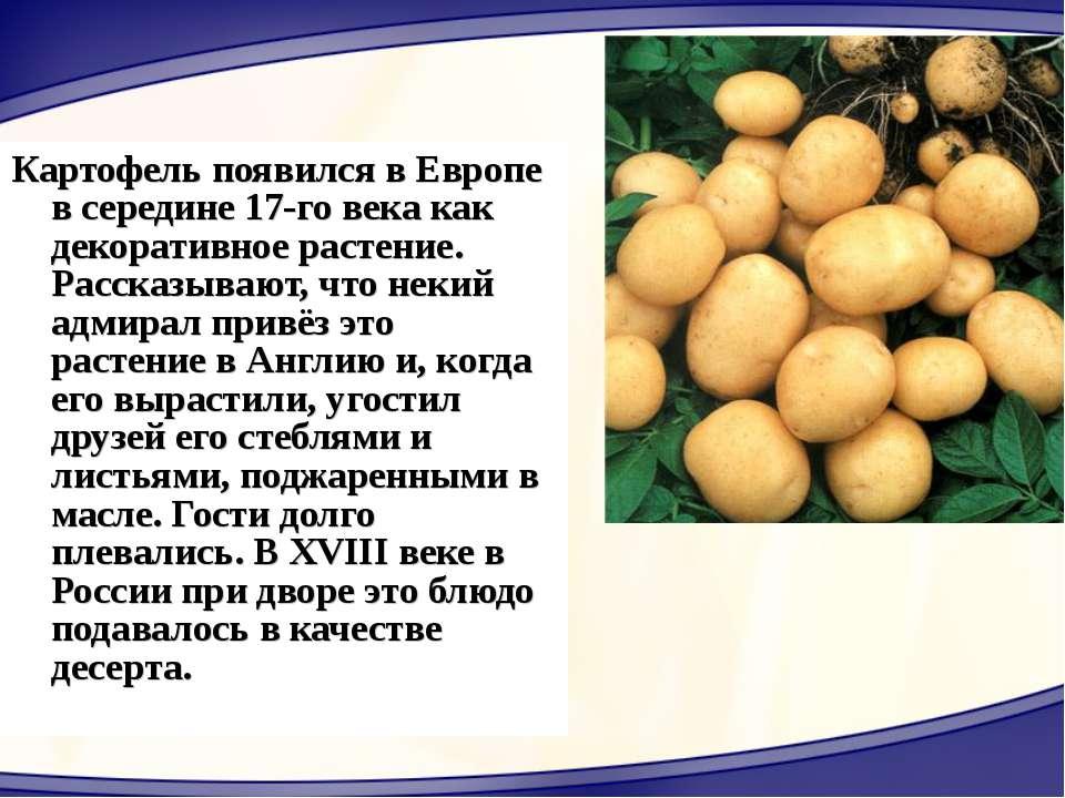 Картофель появился в Европе в середине 17-го века как декоративное растение. ...