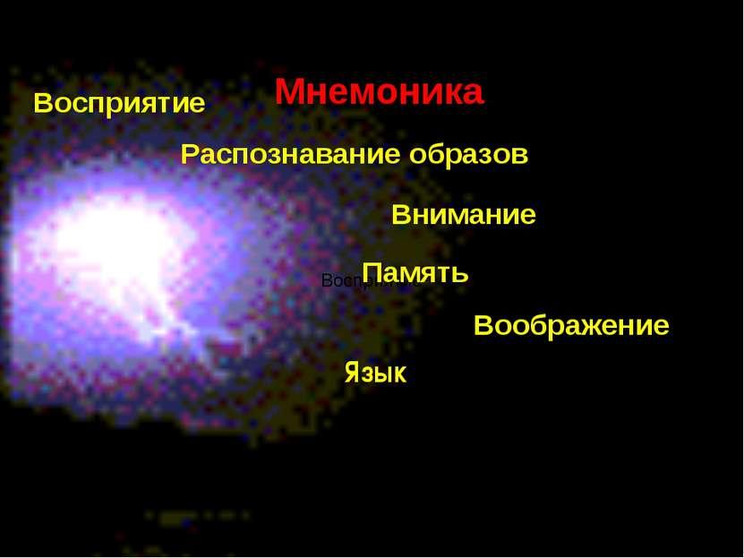 Восприятие Восприятие Распознавание образов Внимание Память Воображение Язык ...