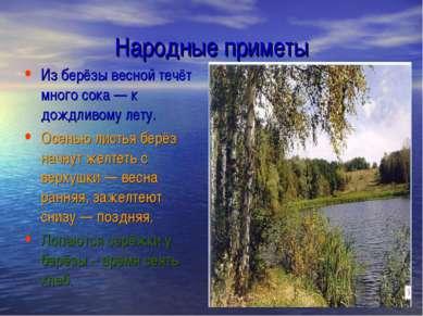 Народные приметы Из берёзы весной течёт много сока— к дождливому лету. Осень...