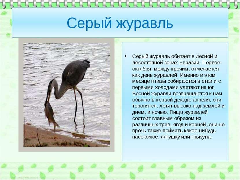 Серый журавль Серый журавль обитает в лесной и лесостепной зонах Евразии. Пер...