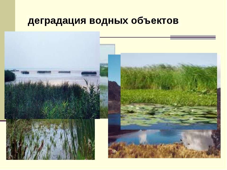 деградация водных объектов