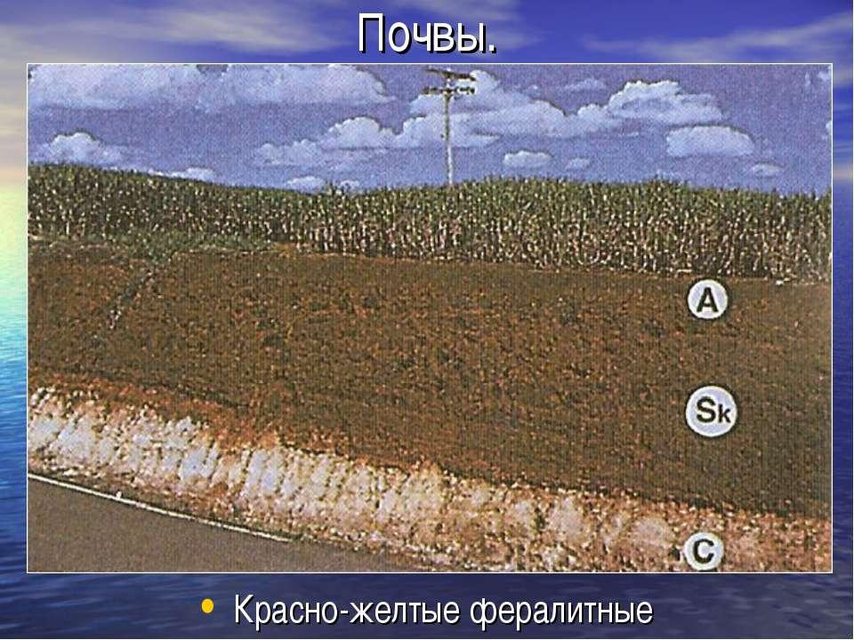 Почвы. Красно-желтые фералитные