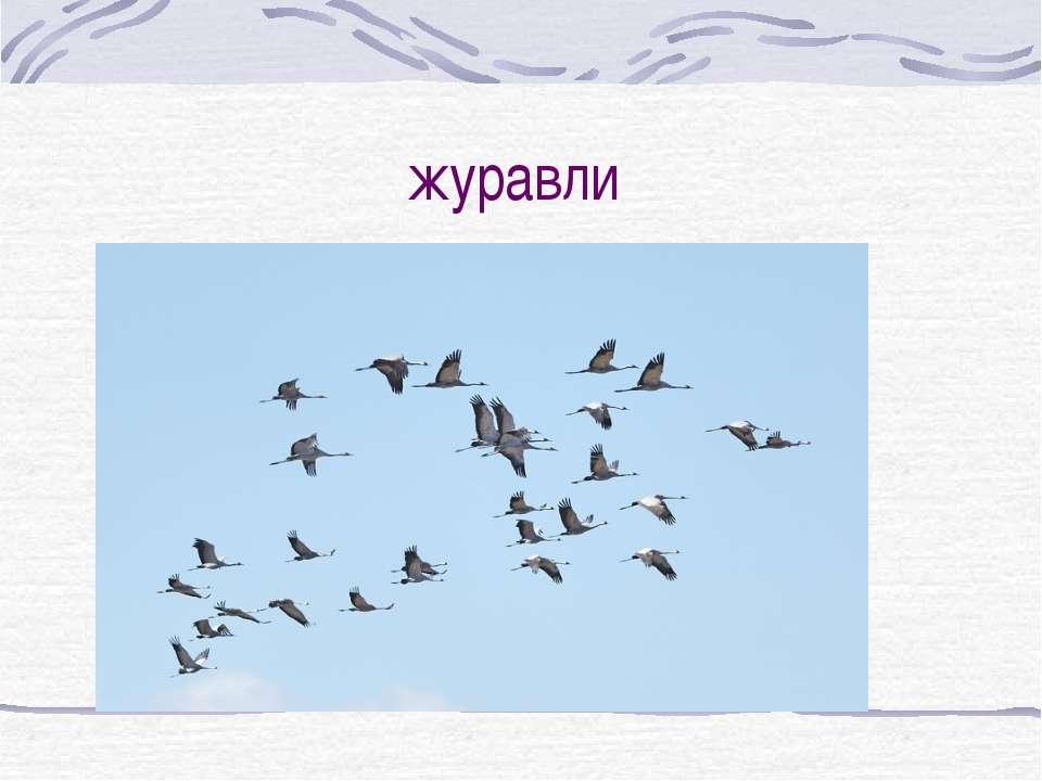 журавли