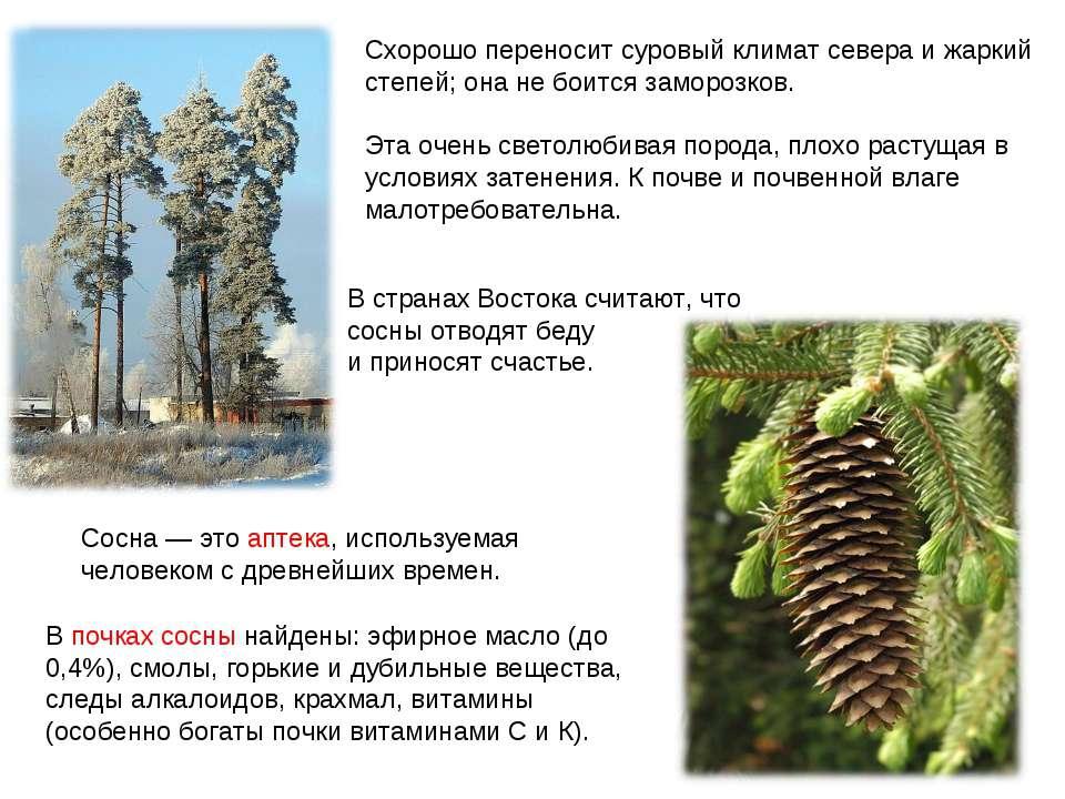 Схорошо переносит суровый климат севера и жаркий степей; она не боится заморо...