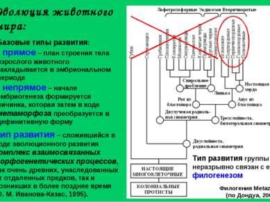 Эволюция животного мира: Тип развития – сложившийся в ходе эволюционного разв...