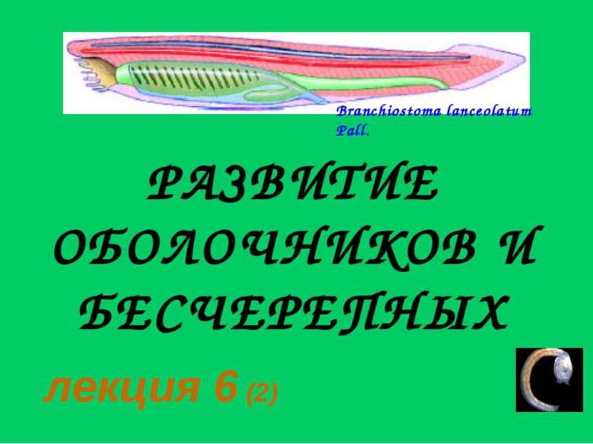 РАЗВИТИЕ ОБОЛОЧНИКОВ И БЕСЧЕРЕПНЫХ лекция 6 (2)