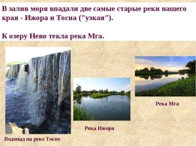 """В залив моря впадали две самые старые реки нашего края - Ижора и Тосна (""""узка..."""