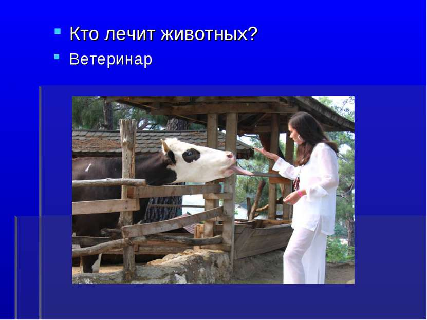 Кто лечит животных? Ветеринар