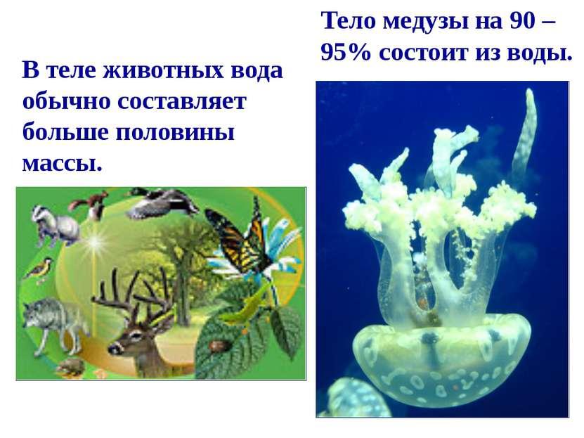 Тело медузы на 90 – 95% состоит из воды. В теле животных вода обычно составля...
